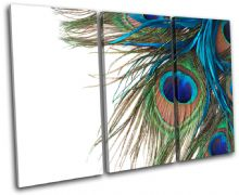 Peacock Feathers Animals - 13-0972(00B)-TR32-LO